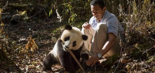 12 HOME Sanjayan  Panda 3 KEN (1)