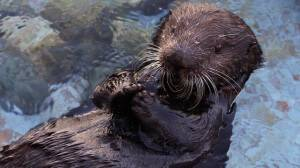 This Sea Otter Has A Great Plan For You: Big Blue Live