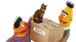 Sesame Street Muppets All Grown Up Part II