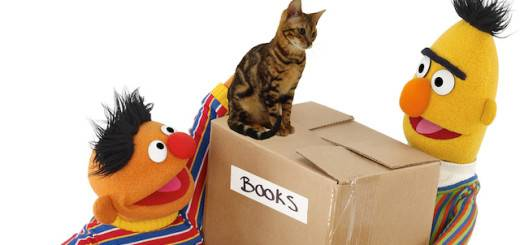 bert and ernie with cats