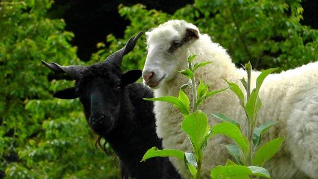 Despite Everything You've Heard, Opposites Don't Actually Attract