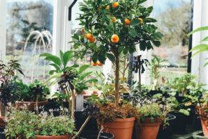 How to Adapt Your Garden to a Changing Climate
