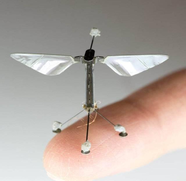 Robot Bees pbs rewire