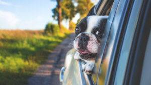 Tips for Happy Travels With Your Dog