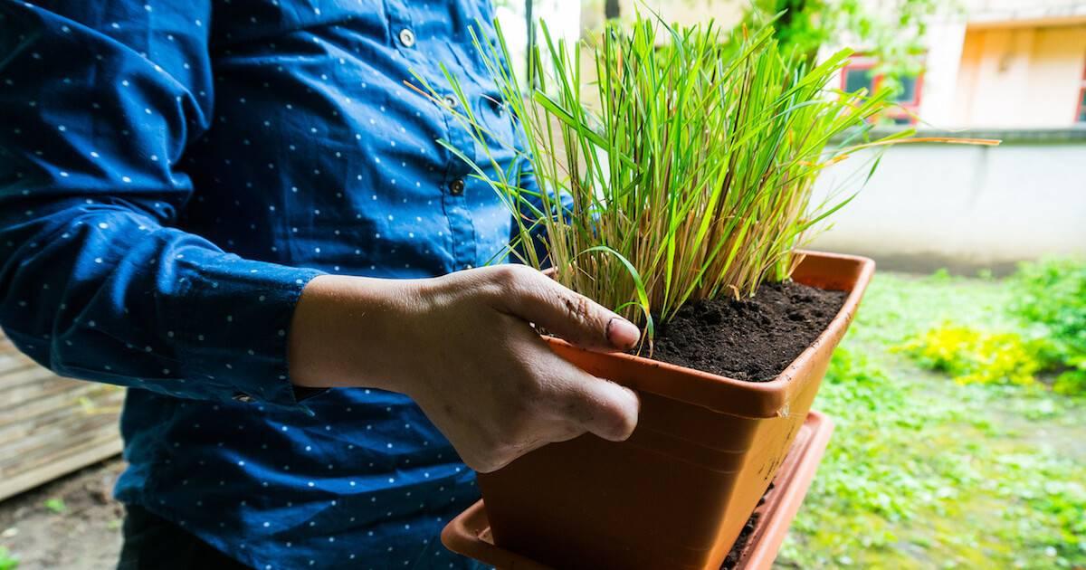 Homegrown herbs pbs rewire