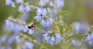 Pollinator-Friendly Practices Any Plant Lover Can Embrace