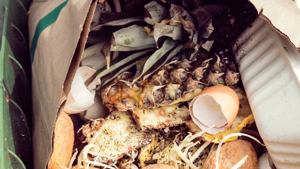 Eggs, pineapple and other organics collected to compost. Rewire PBS Our Future Composting