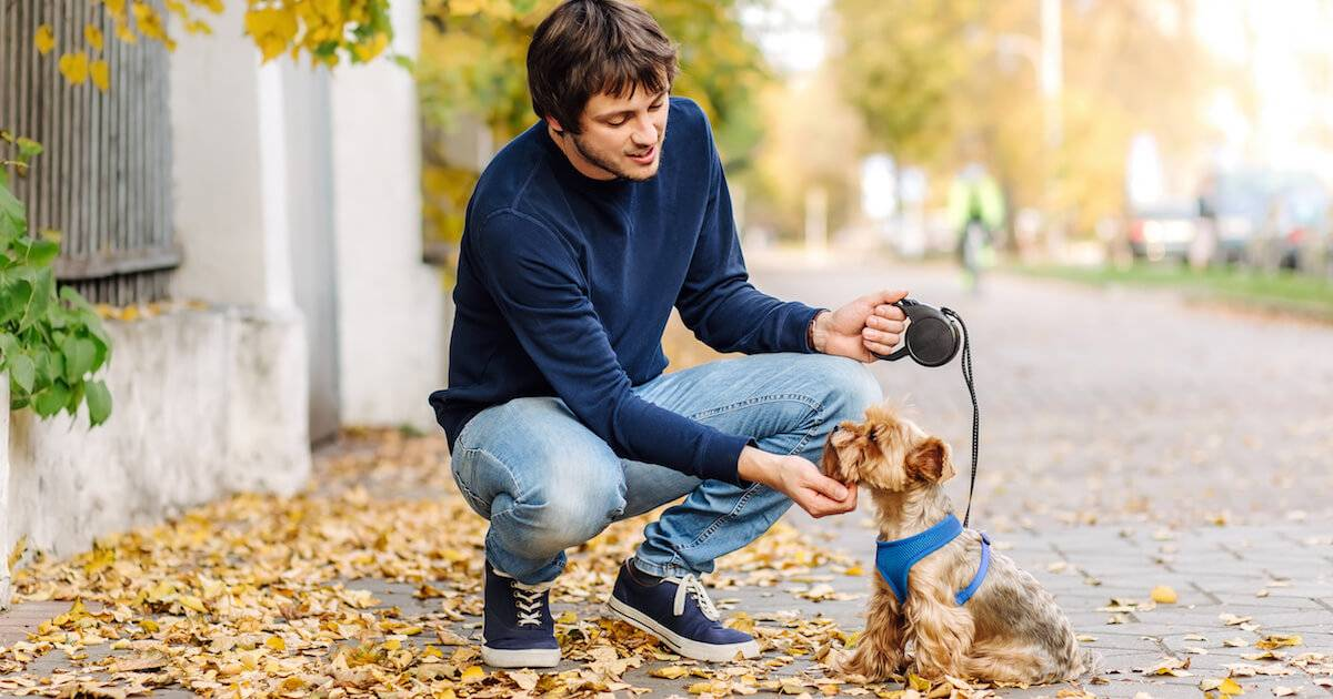 Young man walking small dog. Volunteer pbs rewire