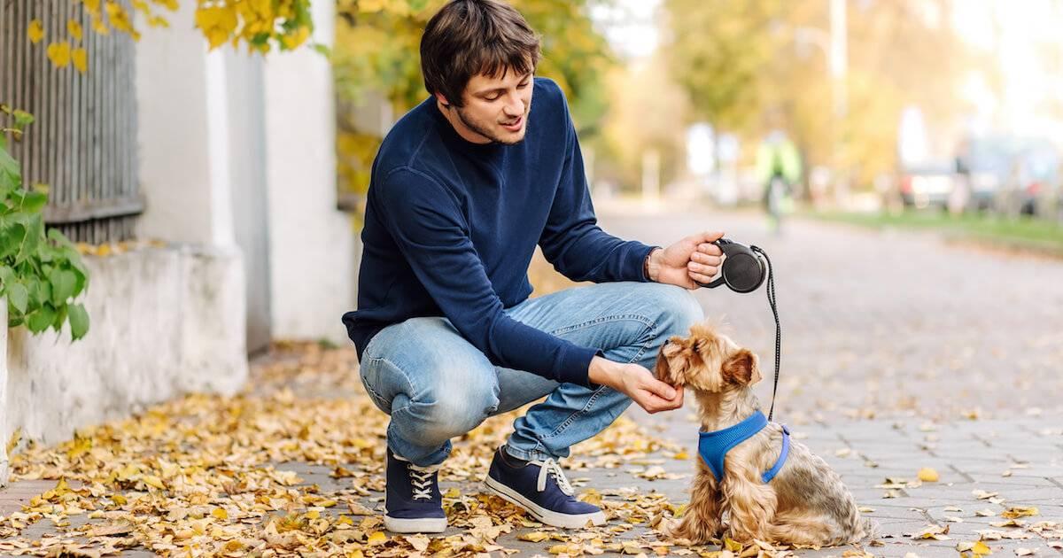 Young man walking small dog. Volunteer pbs rewire