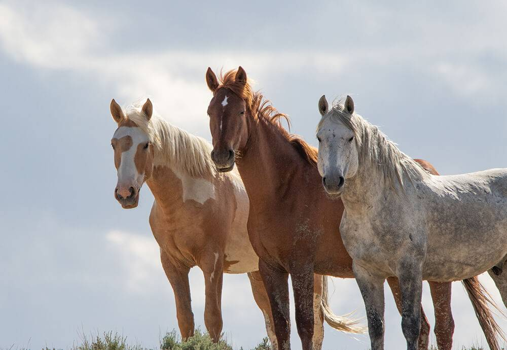 Wild Horses Inspire Photo Opportunities and Controversy ...