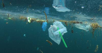 Plastic straws and bags floating in the ocean. Banning Straws pbs rewire