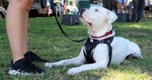 Pit Bull Group Outings Are Changing the Breed's Reputation