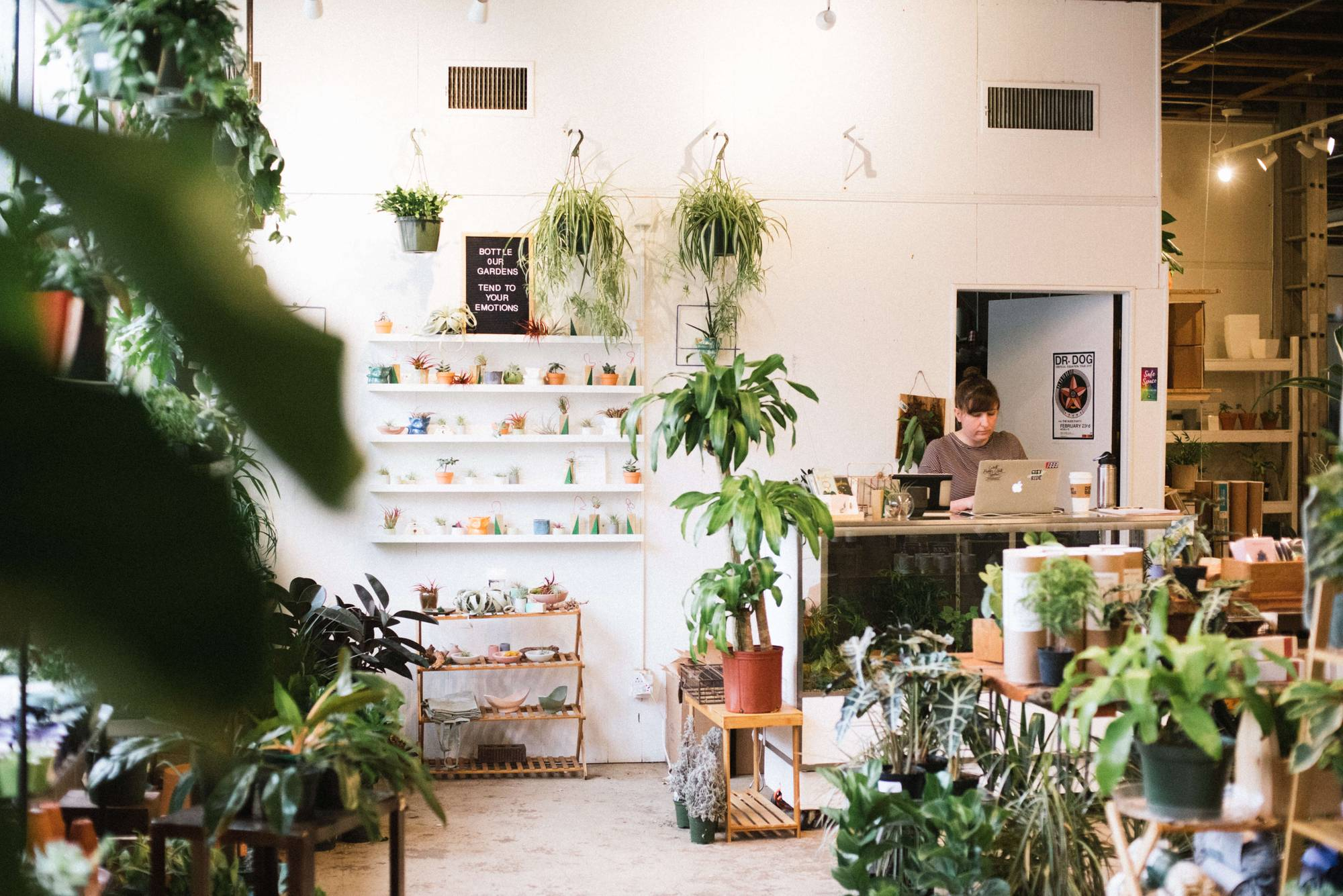 Photograph of a store that sells indoor houseplants and succulents. Rewire PBS Living Indoor Plants