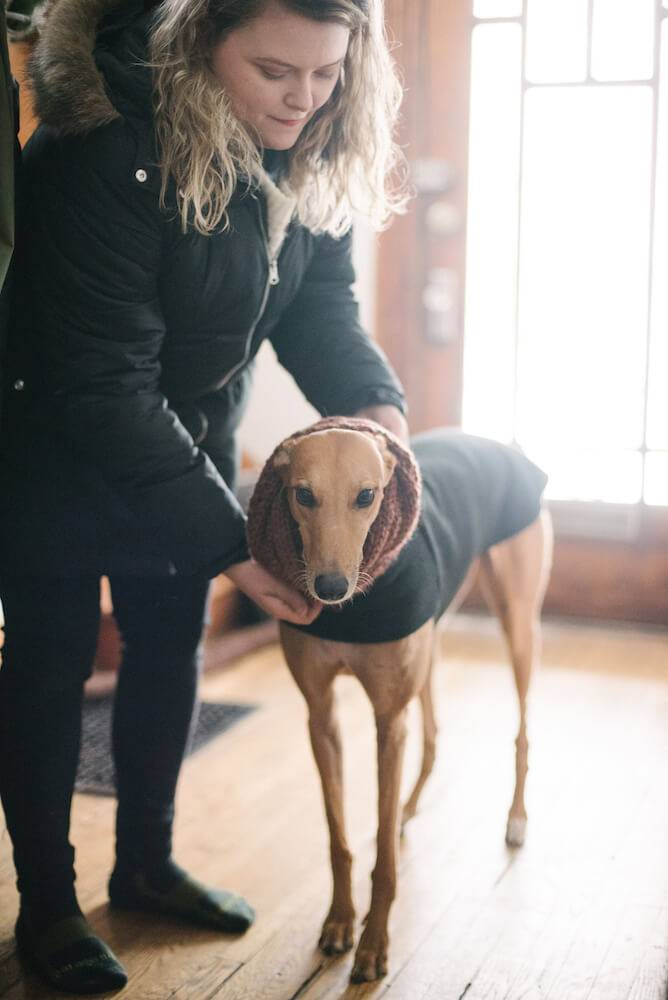Photo of a fawn-colored greyhound being dressed in a black coat to go outside. Rewire PBS Living Greyhound