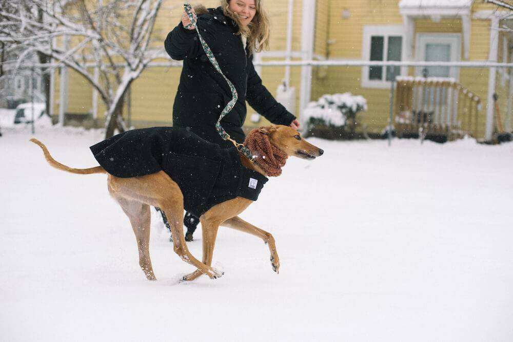 Phot of a woman and a greyhound dog, both in black coats, playing in the snow. Rewire PBS Living Greyhound