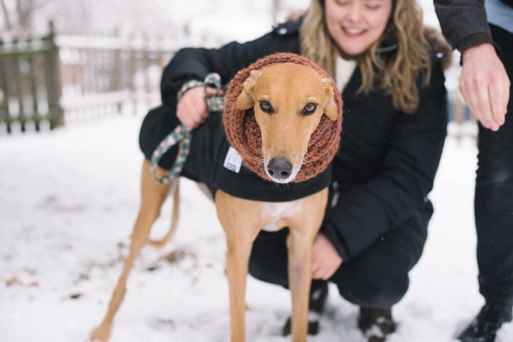 Photo of a fawn-colored greyhound wearing a black coat and her owner. Rewire PBS Living Greyhound