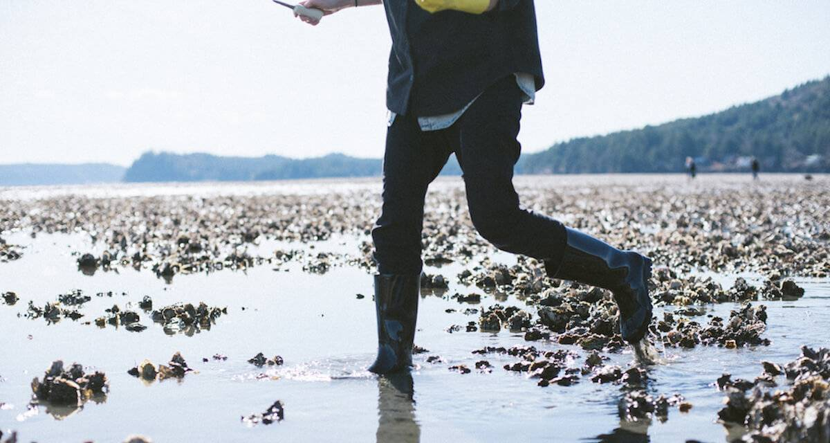 Photo of person foraging for oysters in Washington state. pbs rewire