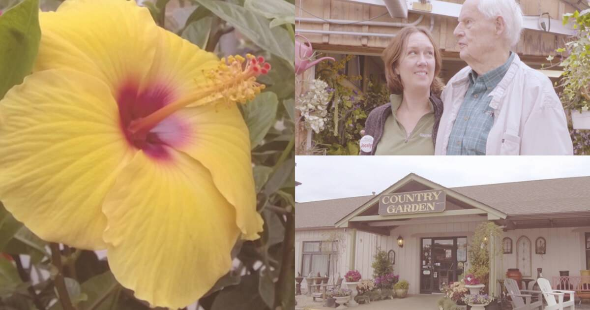 Photo collage of 3 images, a large, yellow hibiscus flower, a woman and an older man, and the exterior of Hyannis Country Garden. Rewire PBS Work